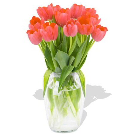 Image of Tender Tulips