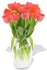 Tender Tulips